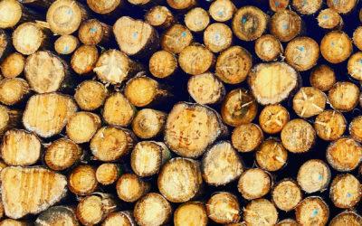 Wenn Holz knapp wird