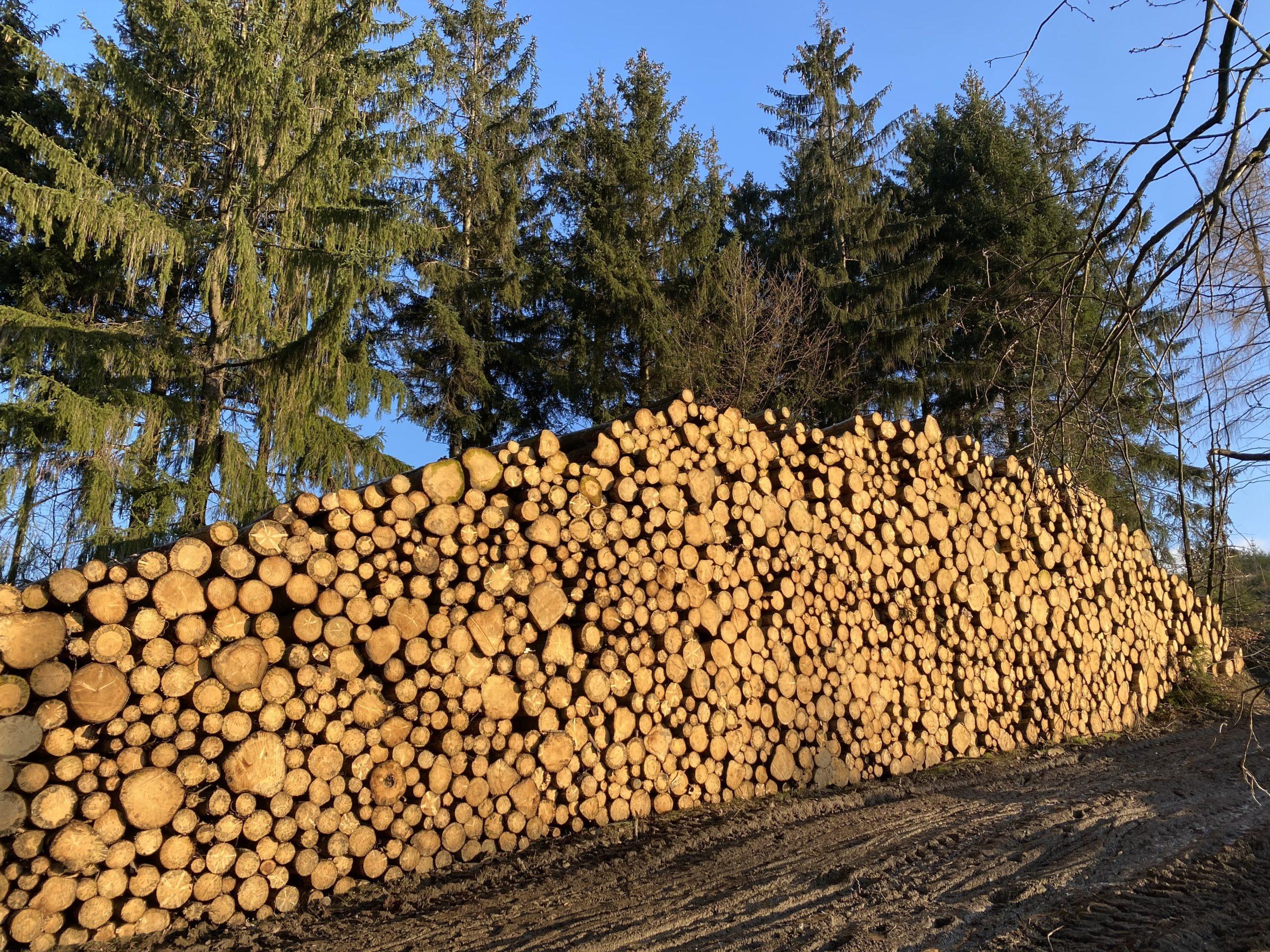 Holz von hier